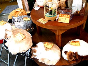 大阪のショップの猫